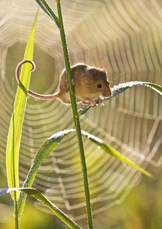 Bu arada çalıya tünemiş fare ve örümcek ağı göz alıcı bir arka plan oluşturuyor.