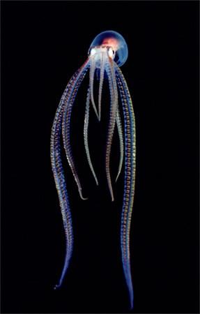 Transparan canlılar