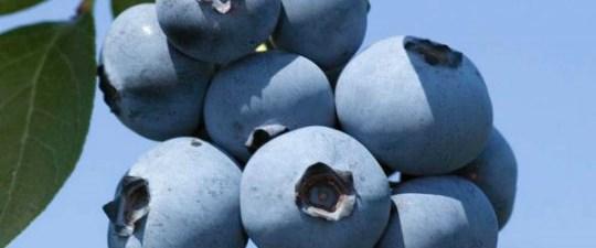 Türkiye yeni meyvelerle tanışacak