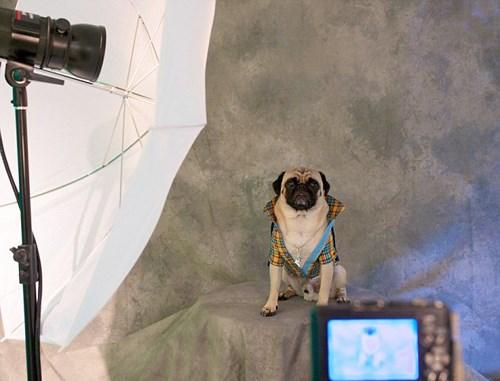Kulüp köpek sahiplerinin köpeklerinin profesyonel fotoğraflarını çektirebilecekleri bir fotoğraf stüdyosu da barındırıyor