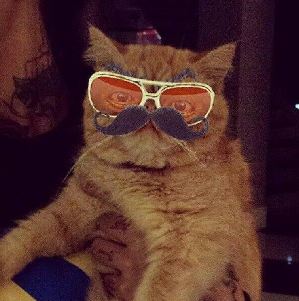 Yeni fenomen Bieber'ın kedisi