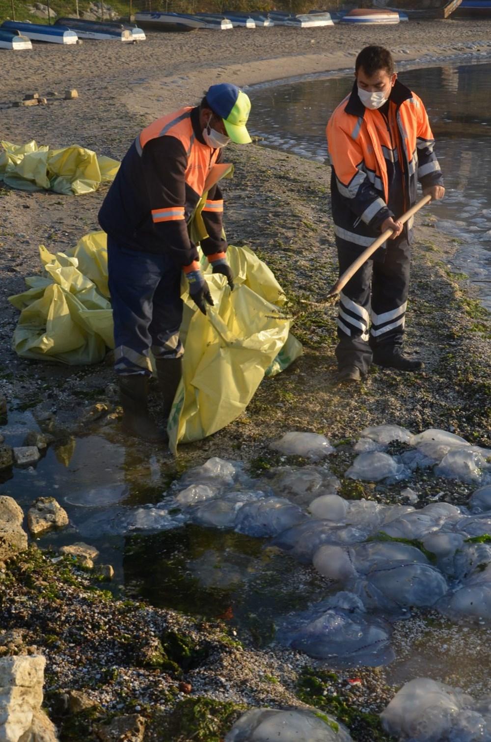 İstanbul'da korkutan dev denizanaları: Her biri en az bir kilo ağırlığında - 9