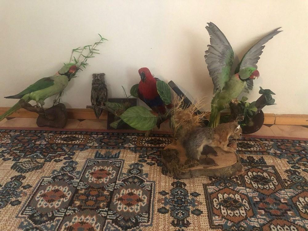 İstanbul'da kanatlı hayvan operasyonu - 6