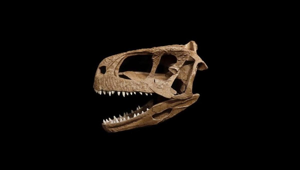 T-Rex'e benzeyen yeni bir dinozor keşfedildi