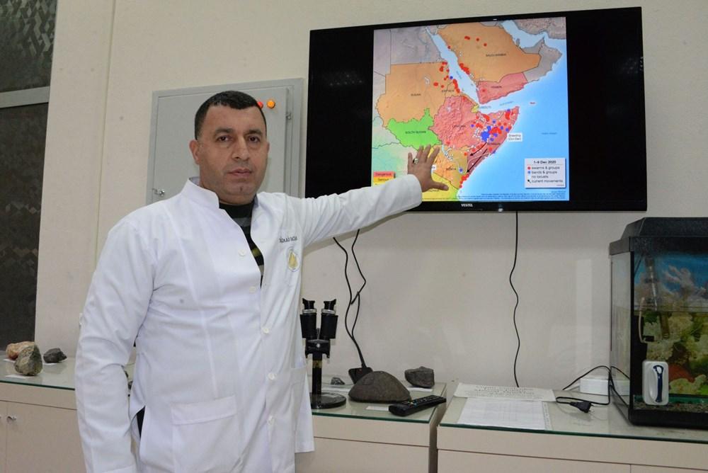 Prof. Dr. Satar: Önlem alınmazsa yumurtadaki çekirgeler 2021'de istilaya neden olur - 1