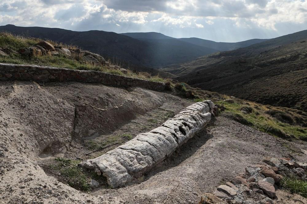 Yunanistan'da 20 milyon yıllık taşlaşmış ağaç bulundu - 1