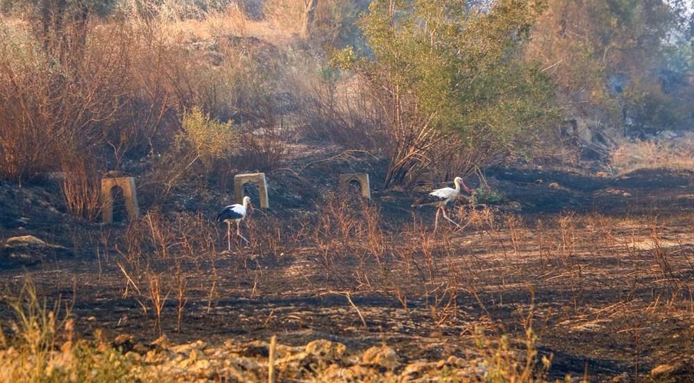 Antalya Manavgat'taki yangın kontrol altında - 8