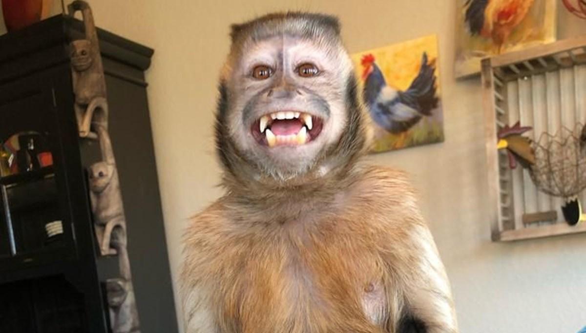 17,6 milyon takipçili TikTok fenomeni maymun George hayatını kaybetti