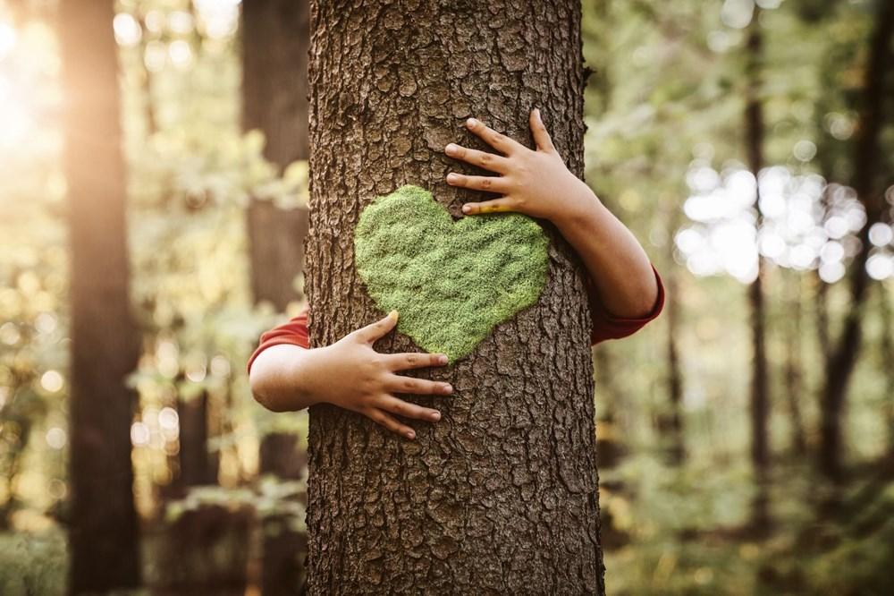 Kuraklık tehlikesi kapıda: Ağaç sayısını yüzde 20 artırmak, yağışlarda yüksek bir artış sağlayabilir - 2