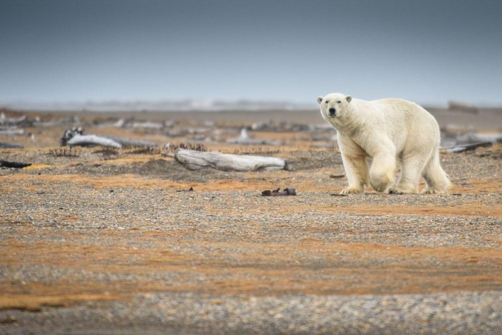 Küresel ısınmaya ilişkin çarpıcı araştırma: 40 yaşın altındakiler felaketlerle dolu bir hayata hazır olmalı - 2