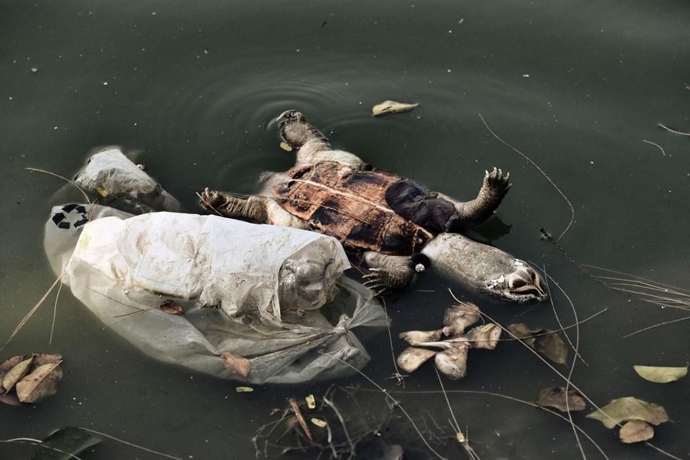 Plastik kirliliği Akdeniz'de kimyasal düzeylere ulaştı: Caretta carettalar ölüyor - 5