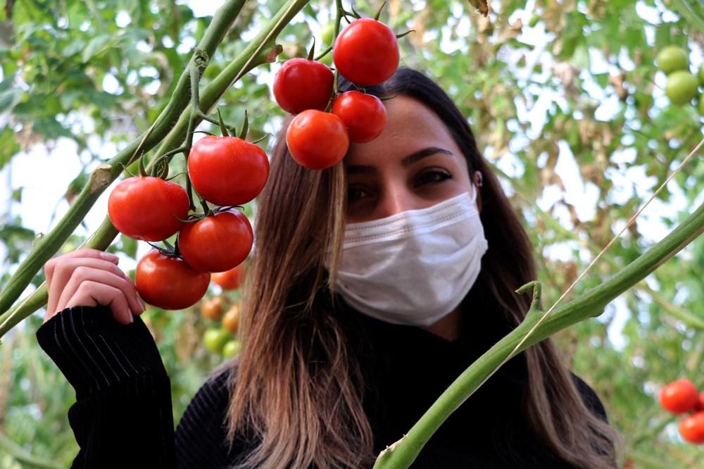 Hava sıcaklığının eksi 40'a kadar düştüğü Çaldıran'da, serada domates üretimi - 3