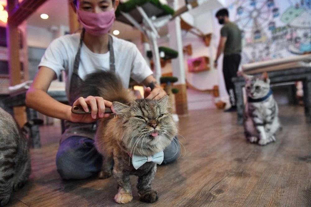 Araştırma: Karantina nedeniyle kediler insanlardan bıktı, sakinleştirici kullanıyorlar - 9