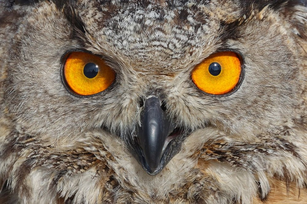 Van'da yaban hayvanları tahnit sanatıyla müzede tanıtılacak - 15