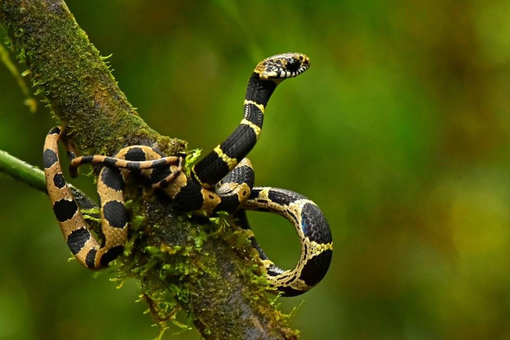 Bilim insanları 20 yeni canlı türü keşfetti - 8